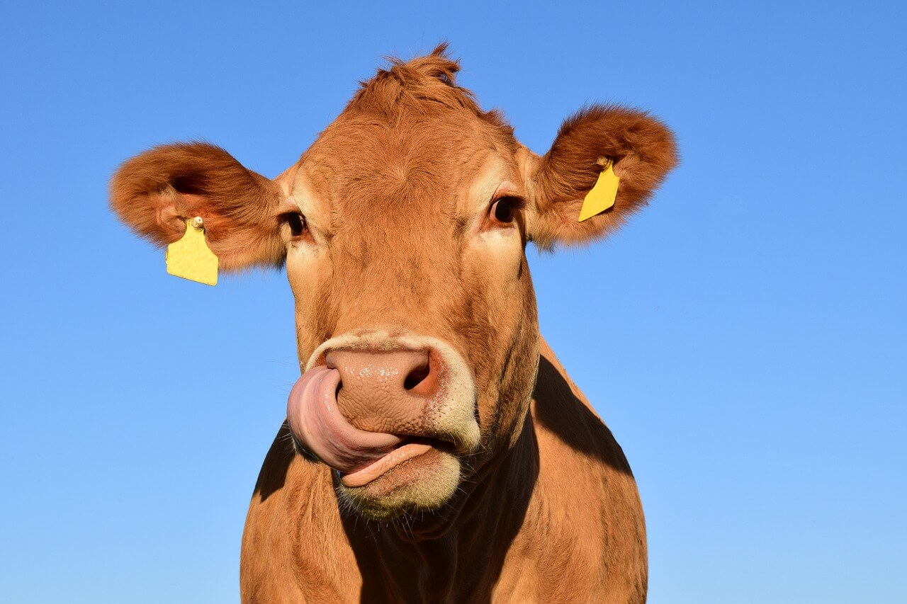 Surové kravské mlieko