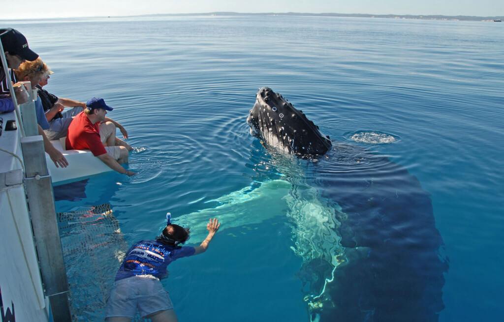 Pozorovanie veľrýb Nový Zéland