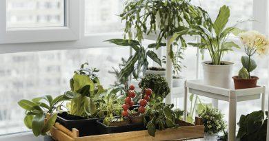 Balkónová zelenina